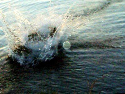 .......er ins Wasser klatscht.....