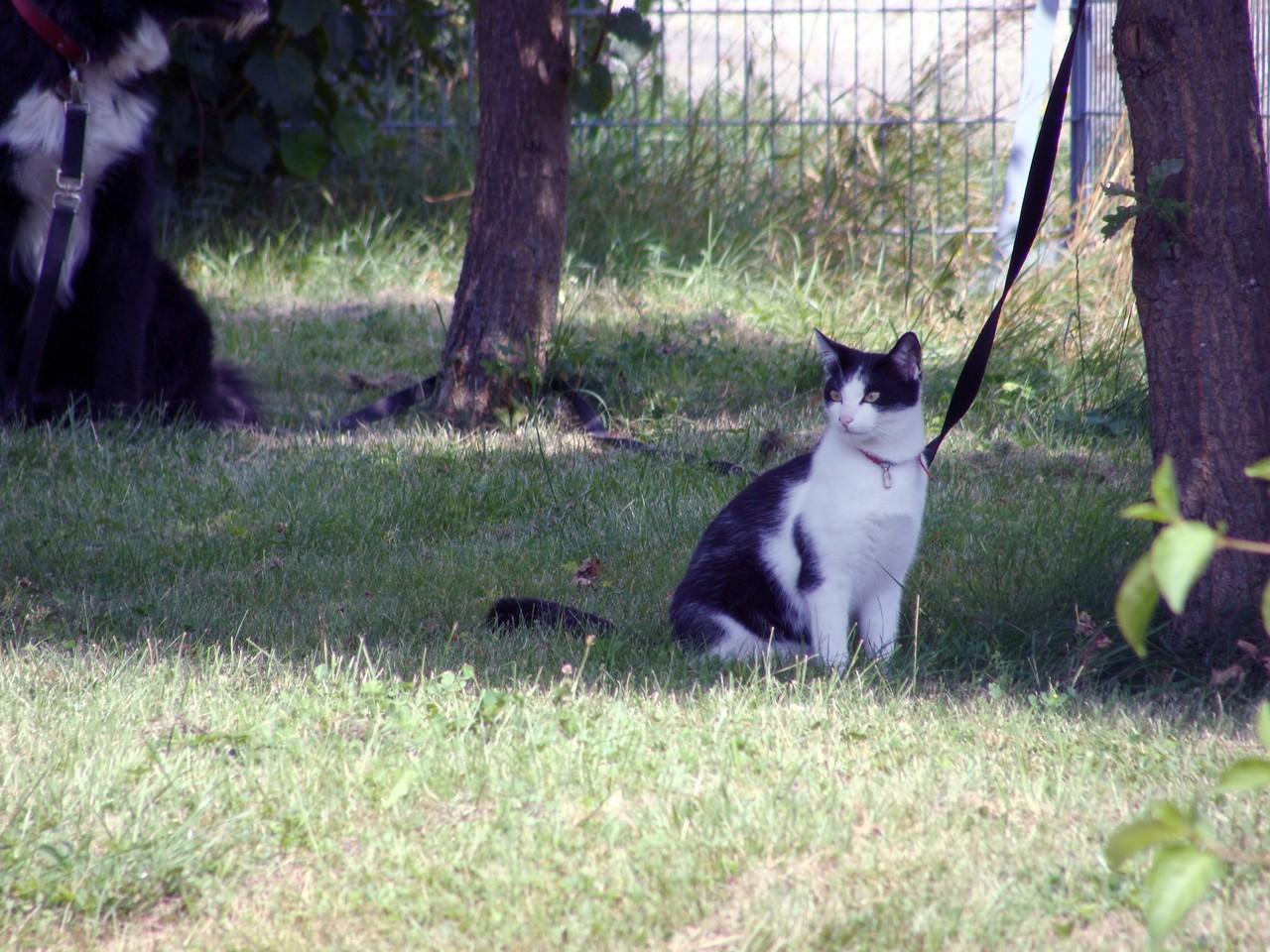 Und eine Katze. Die ist nicht an der Leine, auch wenn es so aussieht. Sie bleibt immer in der Nähe.