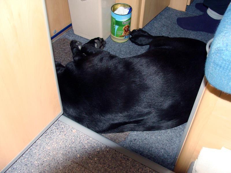 Basco schläft schon seelig.