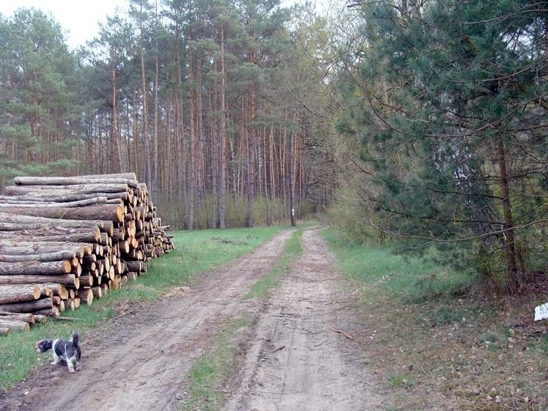 Spaziergang im angrenzenden Wald.