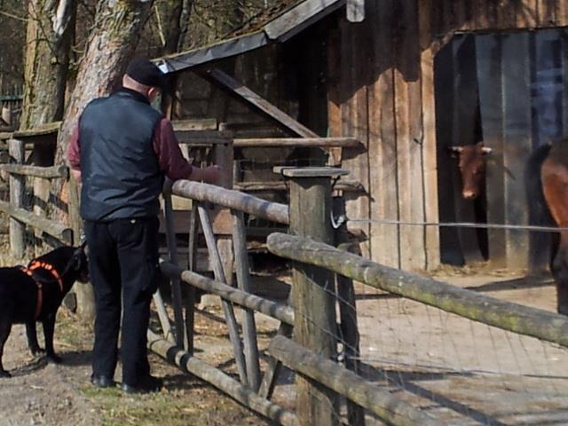 Die Kuh kam nicht raus - da konnte Dirk rufen wie er wollte.