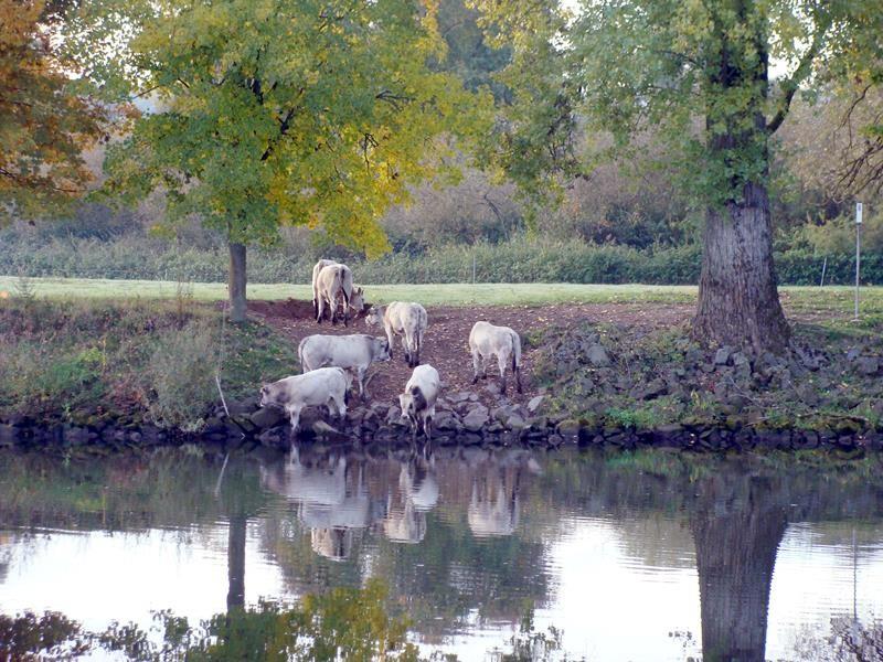 Morgens kommen die Rinder immer zum trinken hier her.