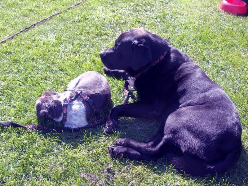 Lucy sucht schon wieder öfter Bascos Nähe.