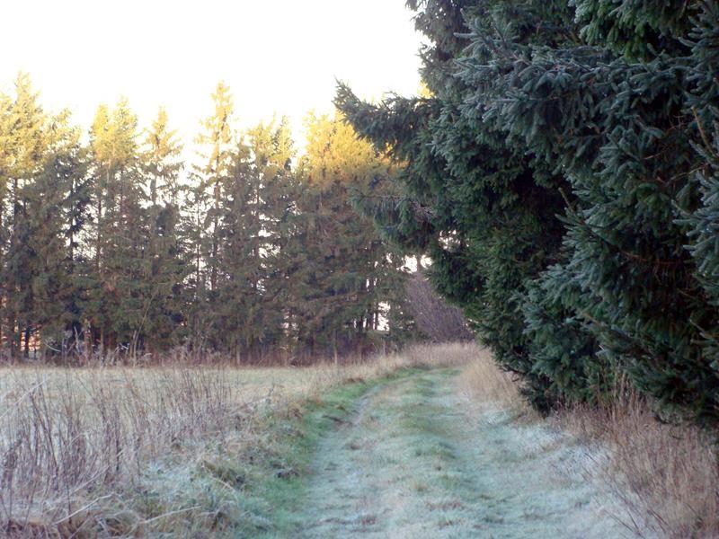 Am Wald entlang