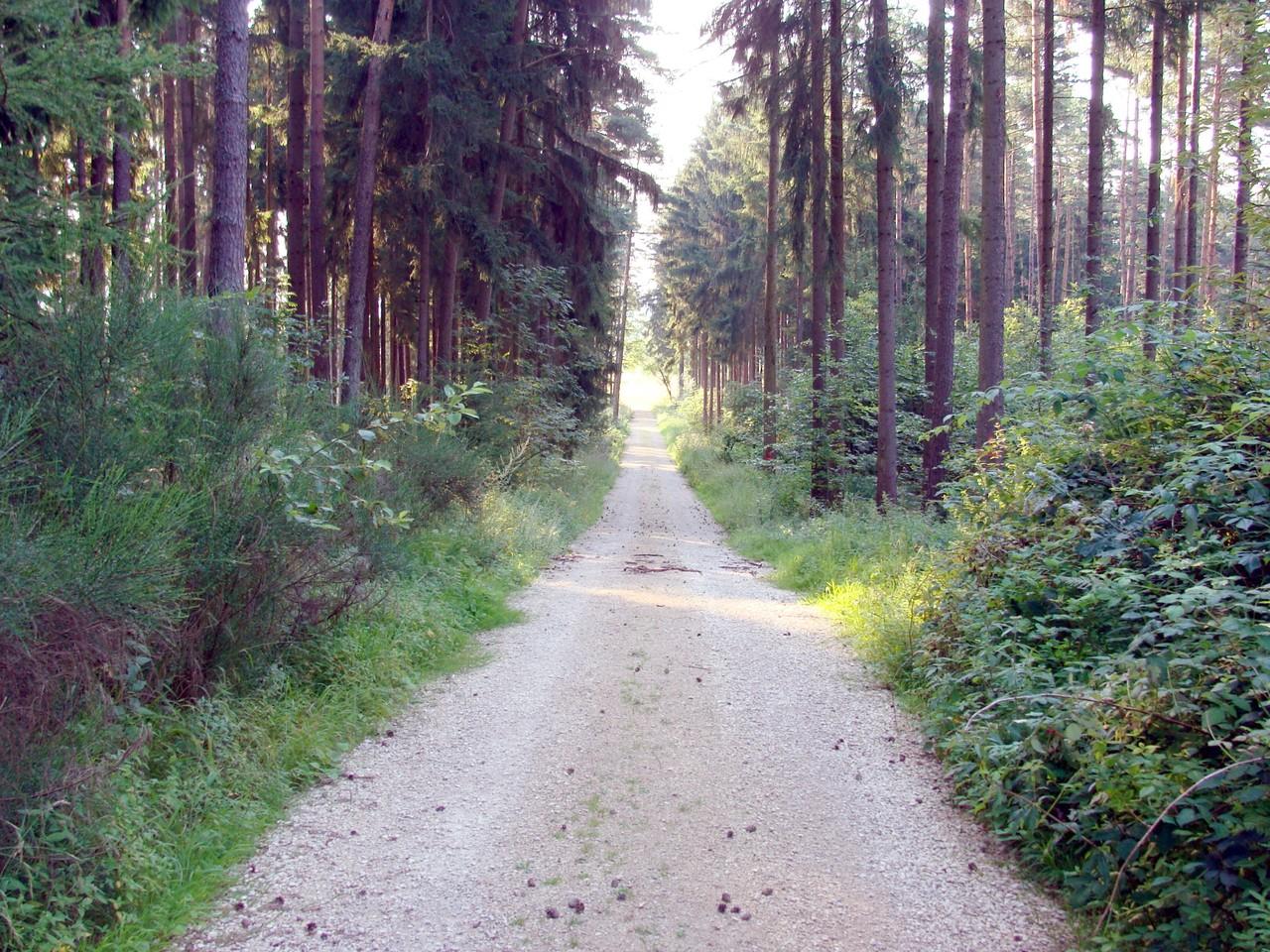 Der Weg führt duch einen kleinen Wald