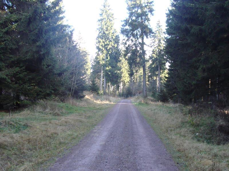 Der Thüringer Wald ist schon sehr schön