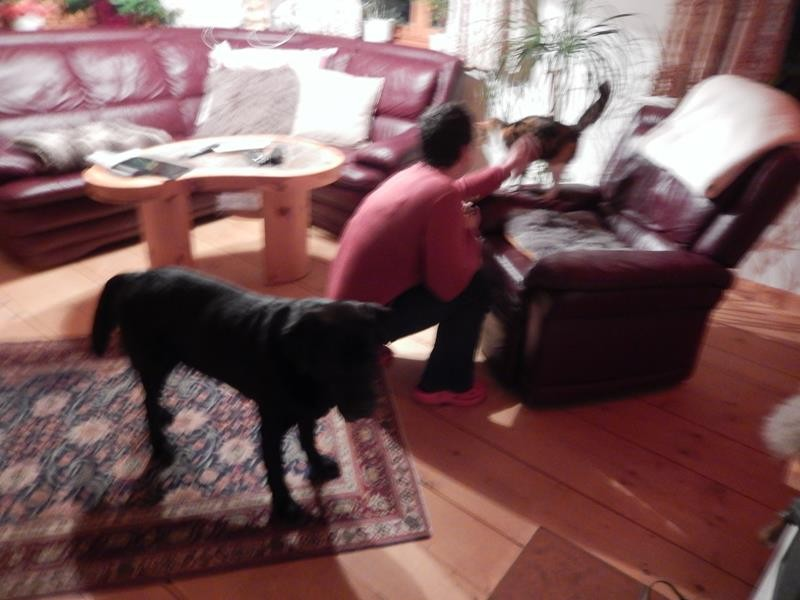 Die Katze des Hauses. Basco hält lieber Abstand