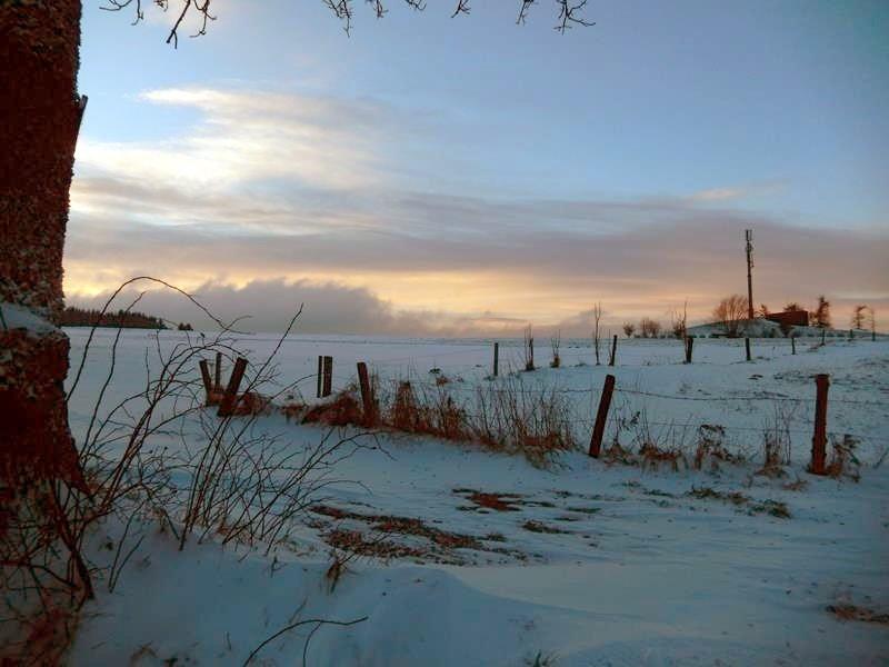 28.12.14. Morgenspaziergang mit Basco. Ist das schön.