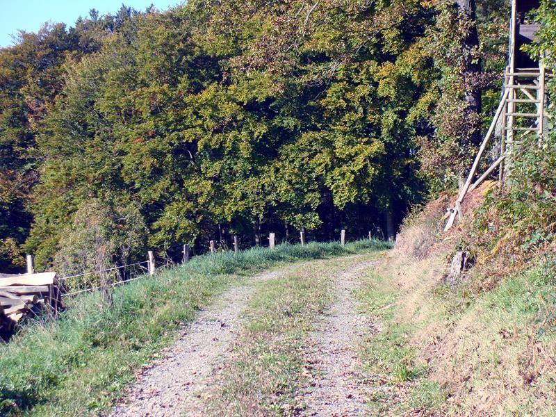 Mein Weg führt mich wieder in den Wald. Ich laufe frei Schnauze - Wegweiser gibt es eher keine.