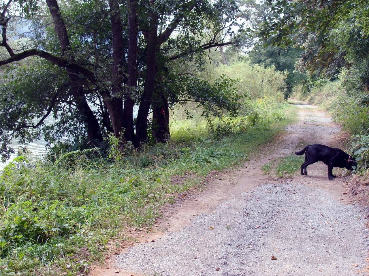 Nach der Ankunft erst mal mit Basco spazieren gehen.