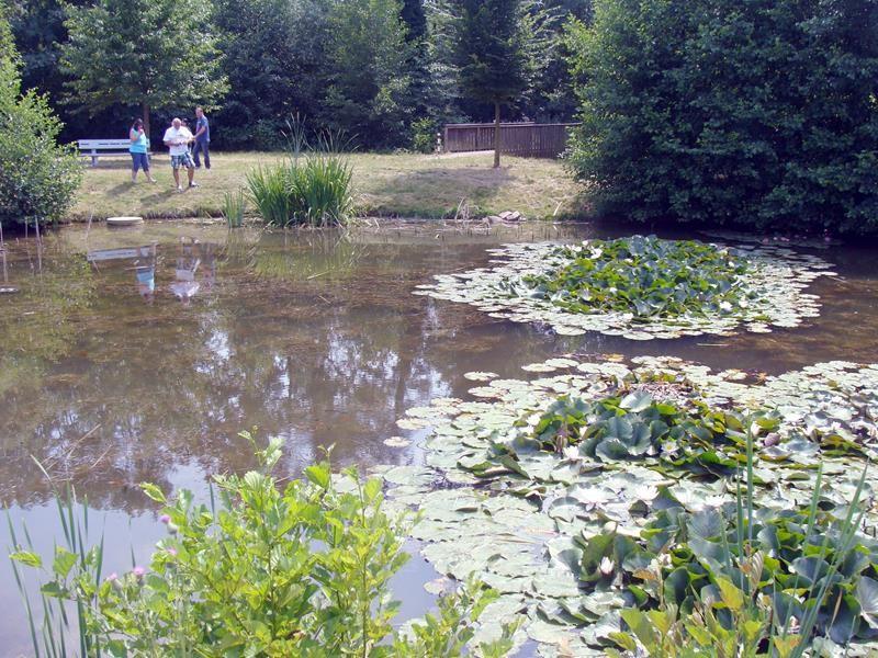 Der Teich ist am Ortsausgang von Wachenheim, ganz in der Nähe des Stellplatzes.