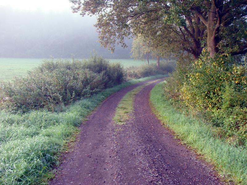 Der Morgendunst hängt noch in der Luft und über den Wiesen