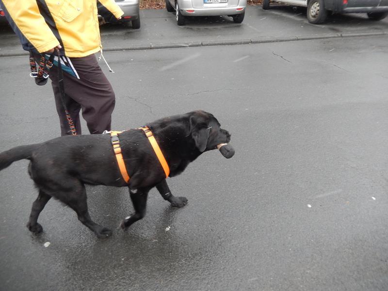 Basco trägt seine Leckerchen spazieren