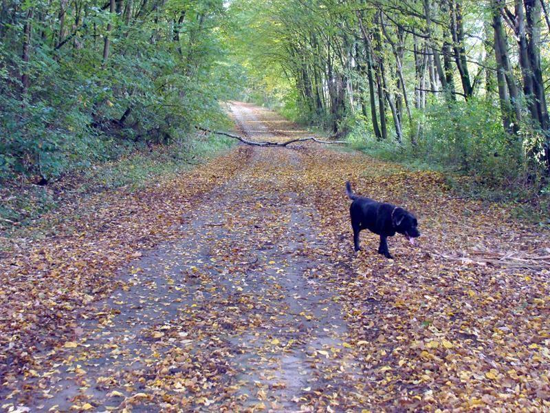 Von Mainstockheim Richtung Dettelbach geht es links über die Straße durch einen kleinen Wald.