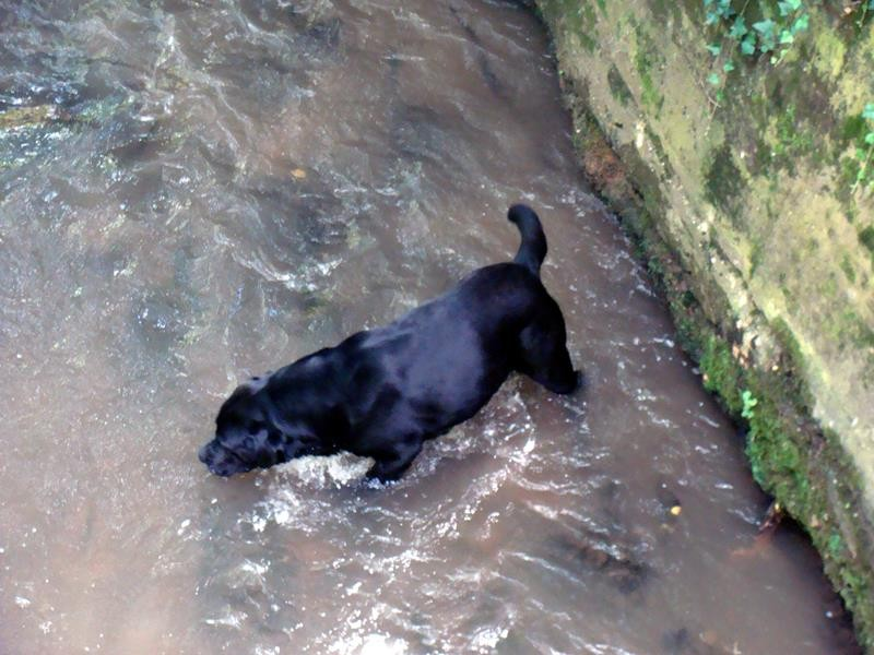 Auch Basco geht baden