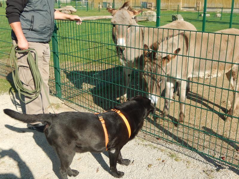 Auch der Esel ist Basco zugetan.