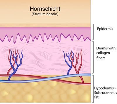 Bild: Aufbau unserer Haut
