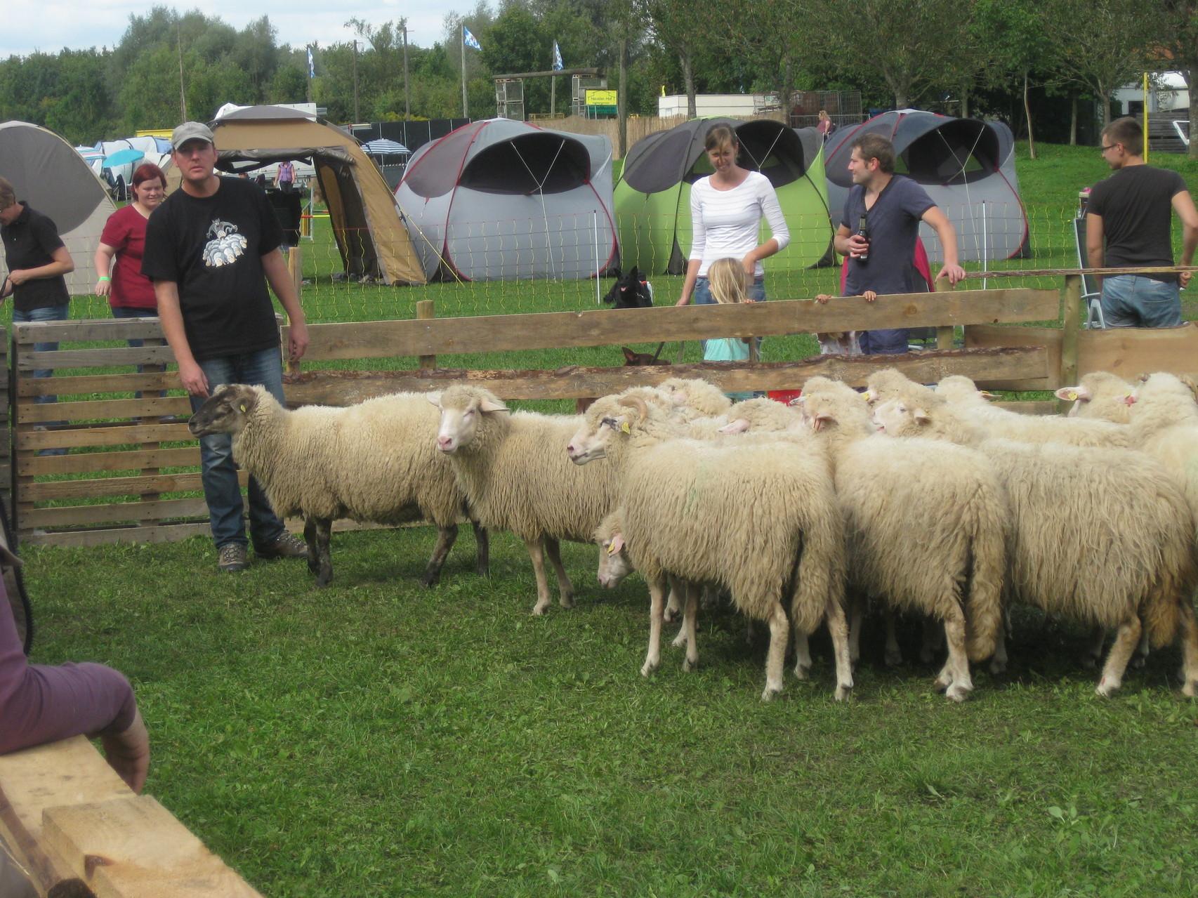 Bei den Schafen stehend, unser Dolmetscher.