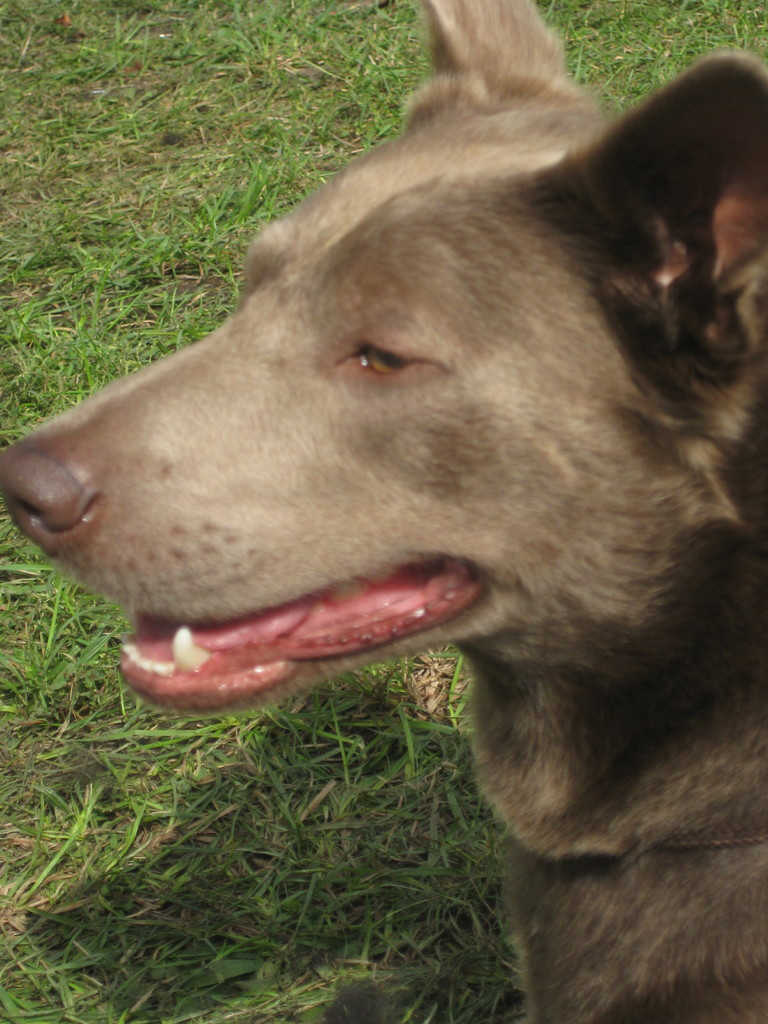 Monty, 3 Jahre
