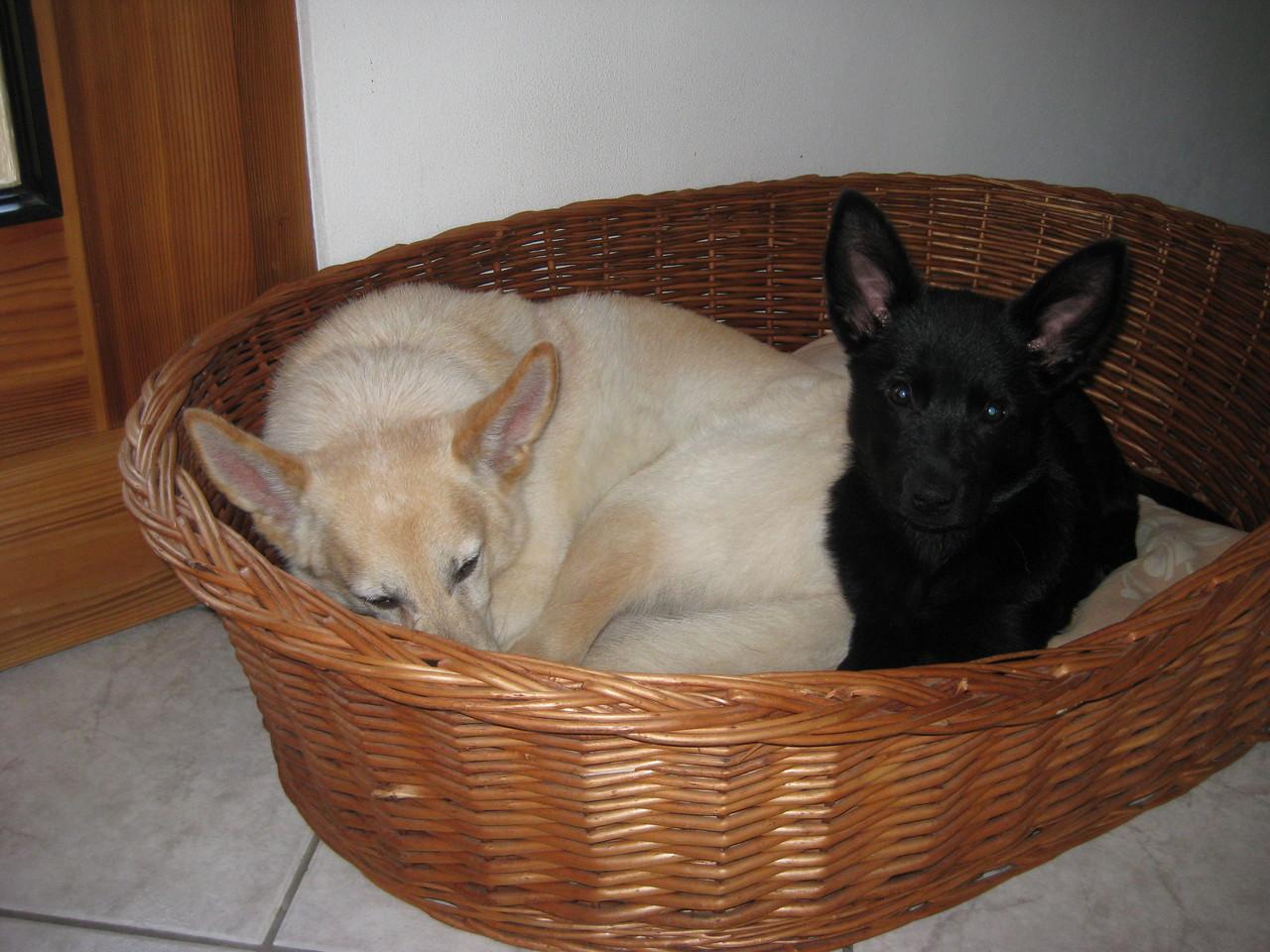 Berry und Ayra im Körbchen.