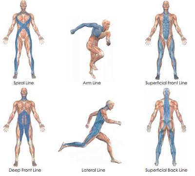 Faszien erklärt - MTT Physiotherapie Surental: Physiotherapie ...