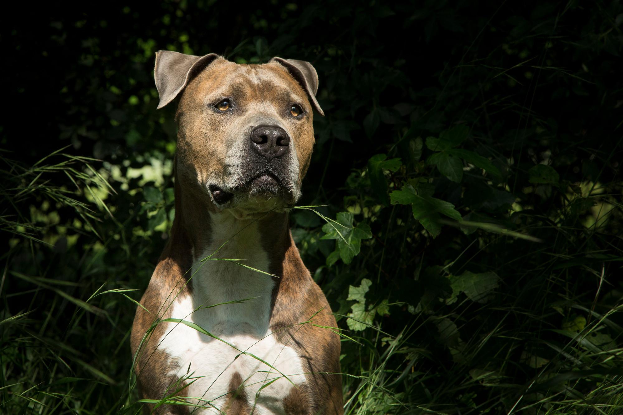 Schweizer Kantone Ohne Rasslisten 1pitdogsnothilfes Webseite