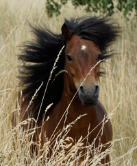 Schoko - Team Ponyschule Oberwetz