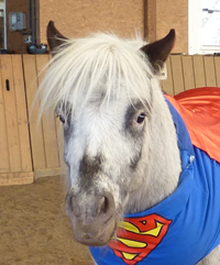 Rasim - Team Ponyschule Oberwetz
