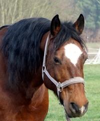 Calanog - Team Ponyschule Oberwetz
