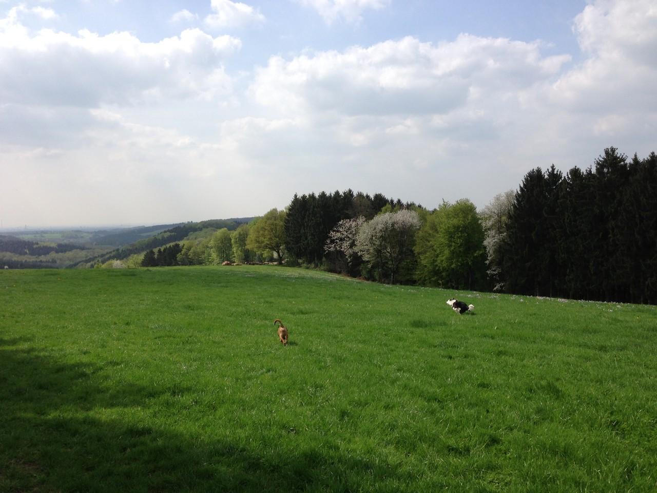 33 Hektar Land für die Pferde stehen zur Verfügung
