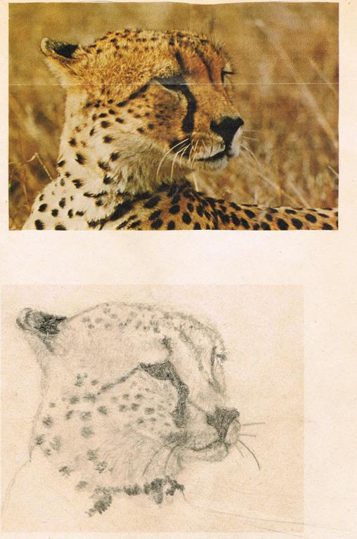 Gepard, 1974