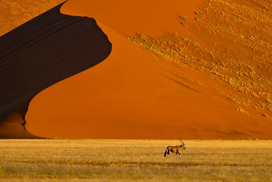 Oryx-Antilope in der Namibwüste