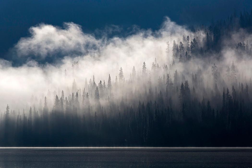 Nebel ziehen über die Wälder Kanadas