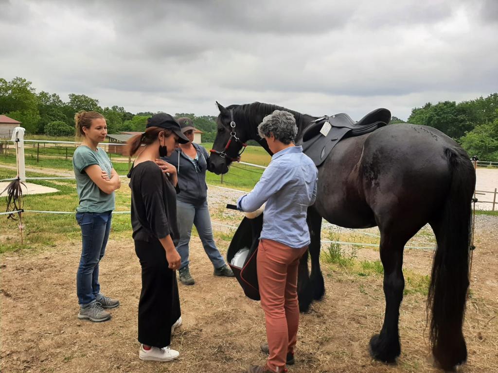 Quand ostéopathie et saddle fitting se rencontrent.