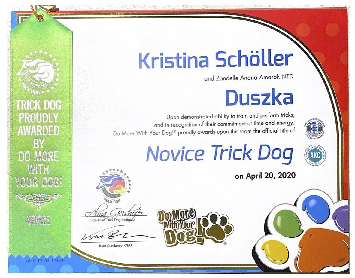 Trick-Dog Workshop am 12.2. - ONLINE EDITION