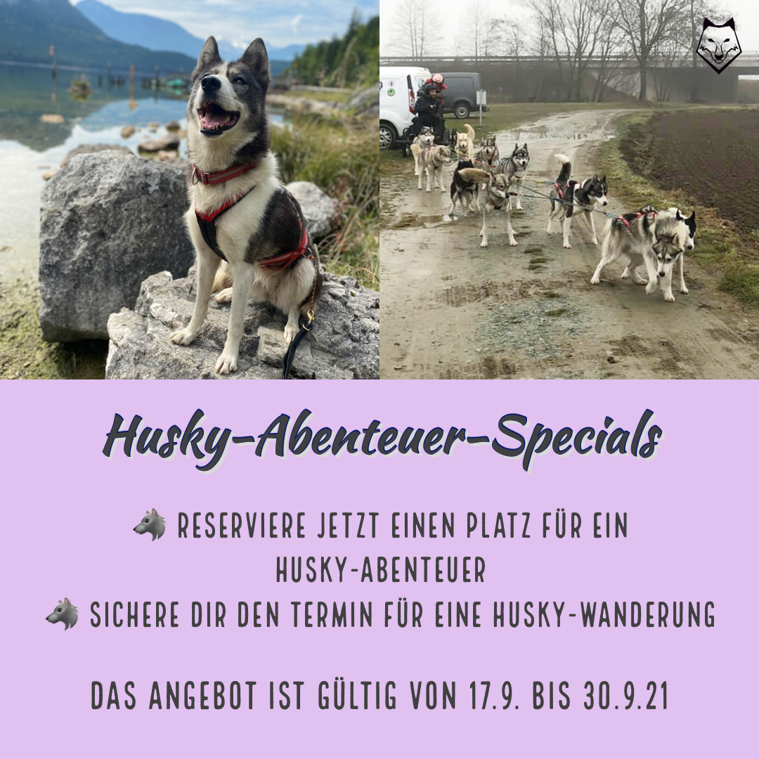 Husky-Abenteuer Specials