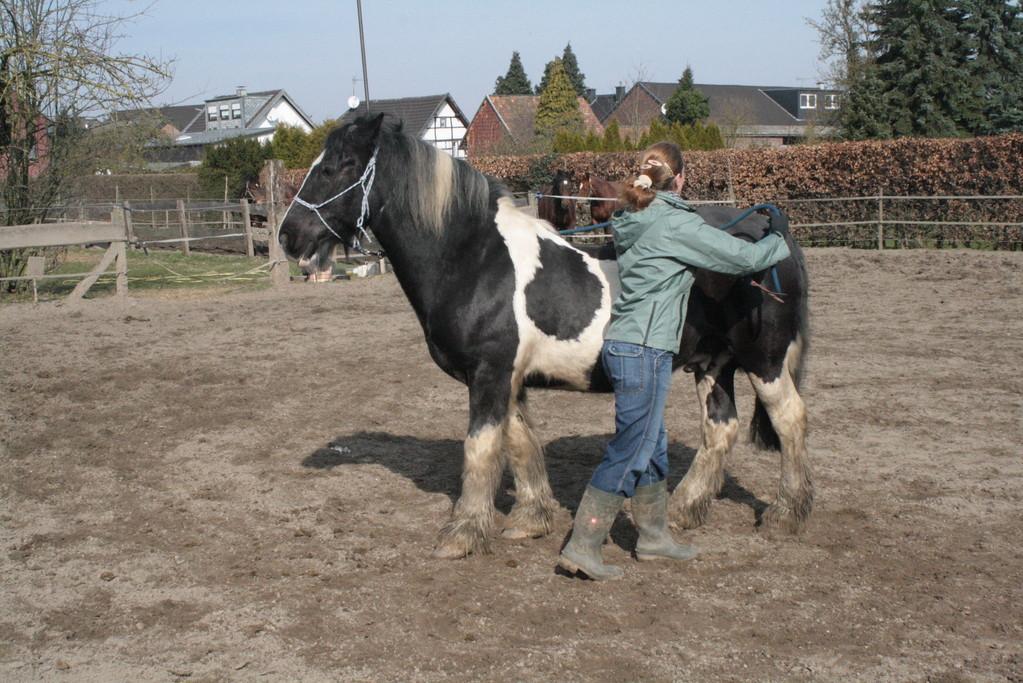 Durch Impulse des Seils am Kopf(Knotenhalfter) und Hinterhand,dreht sich das Pferd