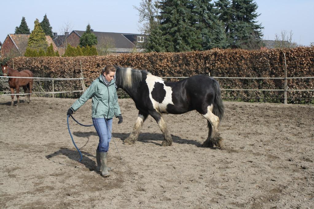 Kreisspiel,Pferd läuft selbstständig um einen herum