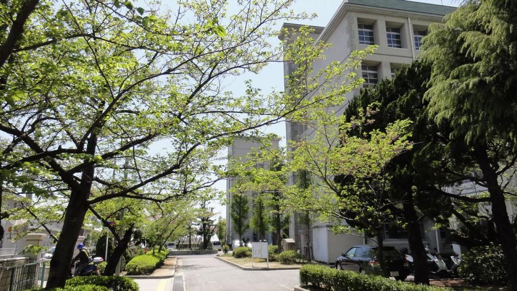 北門よりの校景、桜の開花が待遠しいね。
