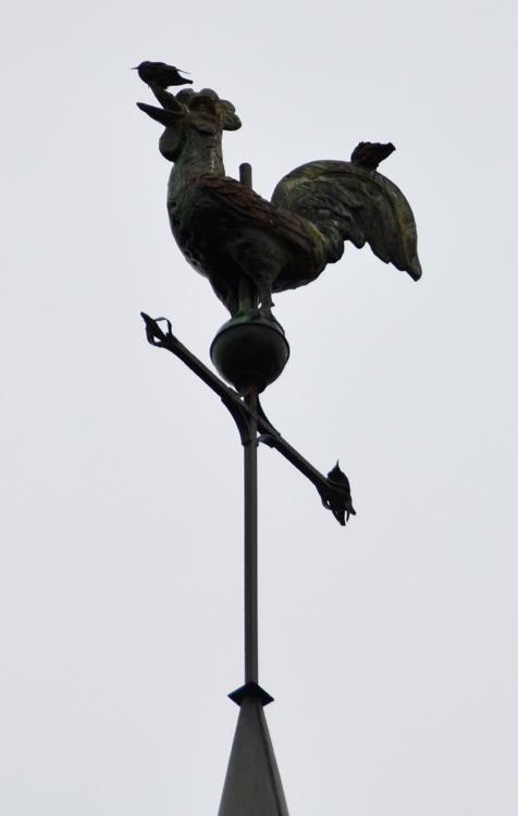 Le coq du clocher de Chuignes qui sert de reposoir aux étourneaux