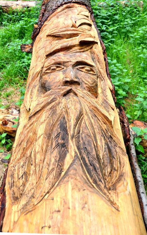 Le tronc devient arbre sacré, l'arbre des druides