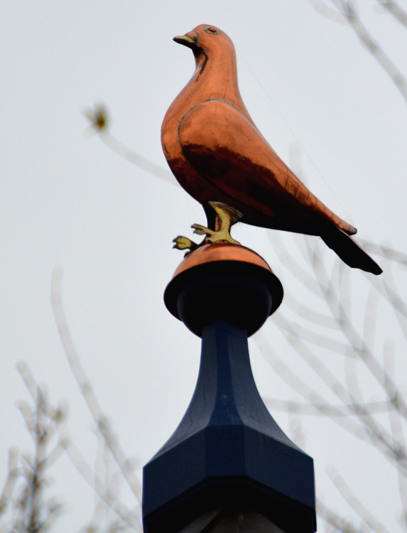 Au sommet du pigeonnier: un magnifique pigeon