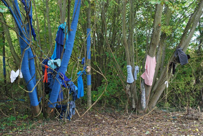 Des artistes sont venus habiller les arbres en bleu