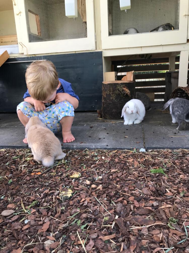 Meine Kinder vier und zwei sind überglücklich mit den Tieren aufwachsen zu dürfen, dadurch sind die Tiere sehr zahm und zutraulich