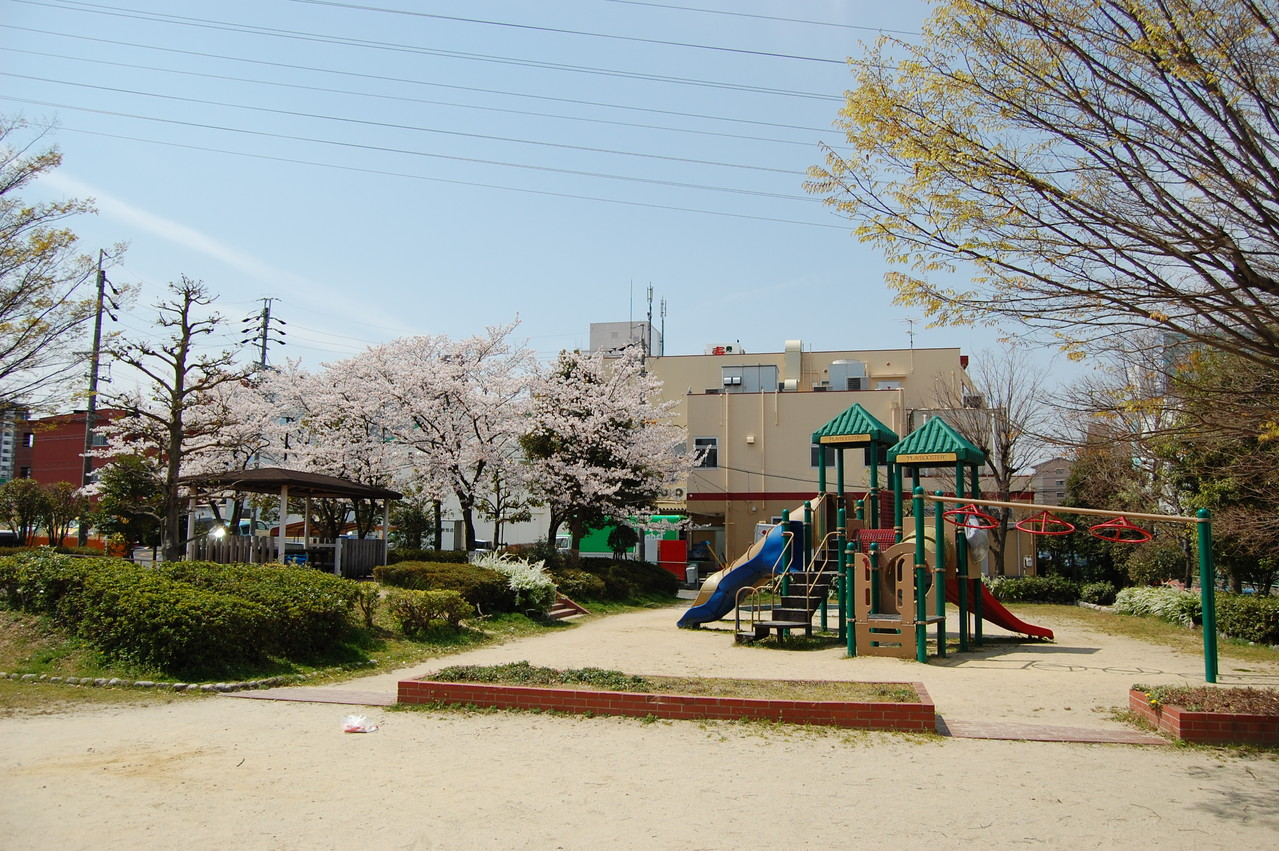 春は桜がきれいです