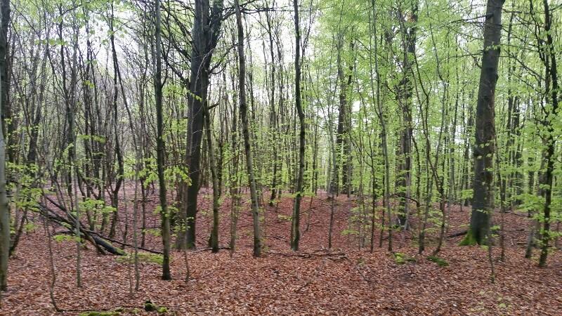 vorbei an einem unserer Hügelgräber der Schnurkeramiker