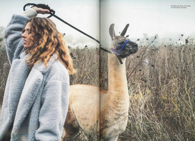 Unsere Lamas als Models...