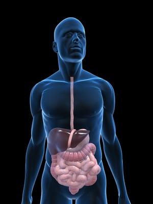 Enfermedades de intestino