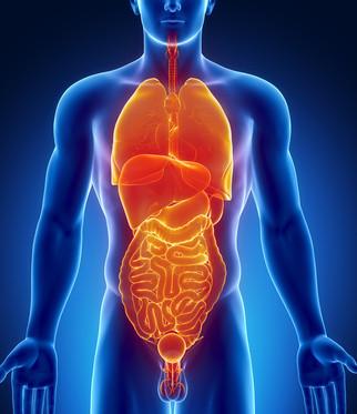 Sistema de digestión