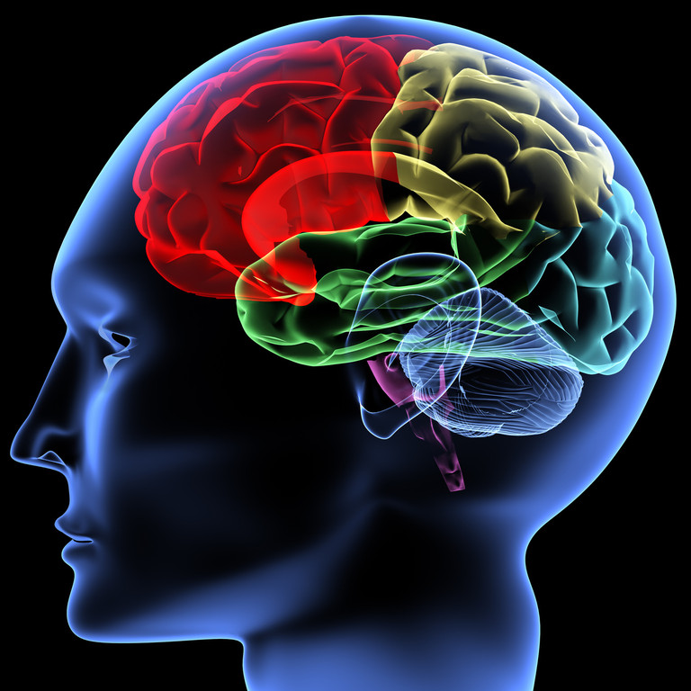 Functioning brain